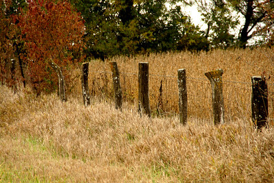 Wood fence posts - southeast Atchison County