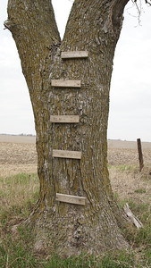 Wood blocks attached to tree trunk on tree for a ladder
