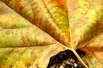 Closeup of a fallen leaf