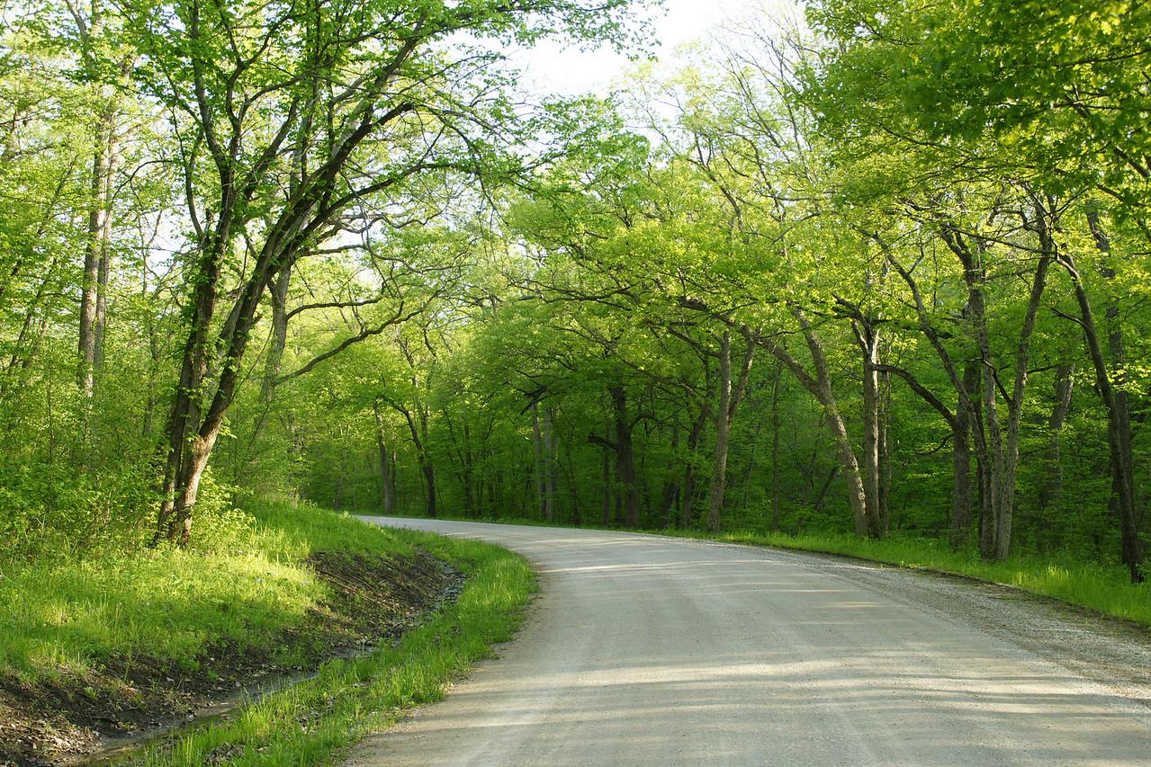 Rural road thru forest near Chicken Creek