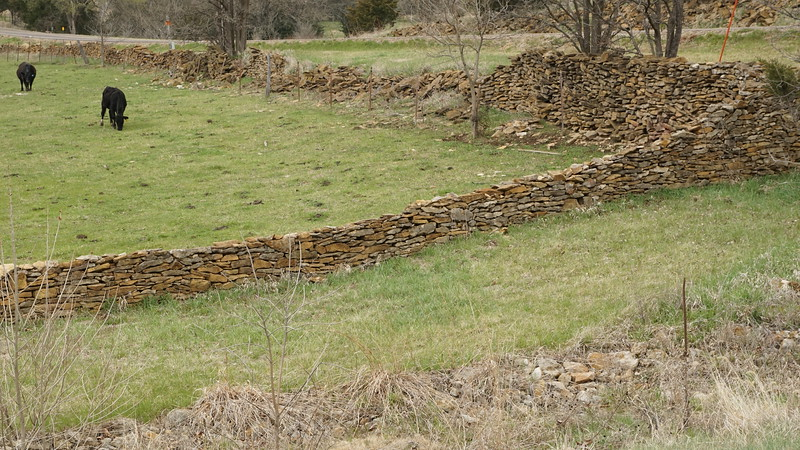 Remnants of stone fence near Rock Creek and cattle in pasture.