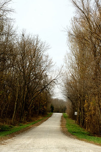 Tree lined road - western Johnson County.