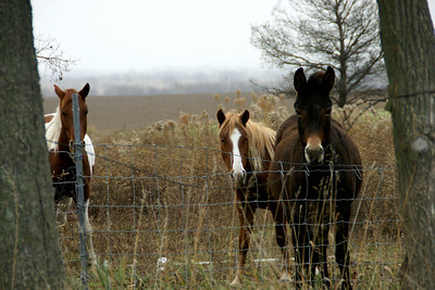 Horses in southern Johnson County