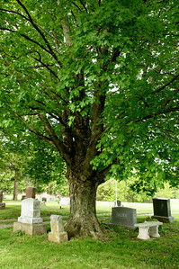 Large Oak tree at Fall Creek Cemetery north of Tonganoxie