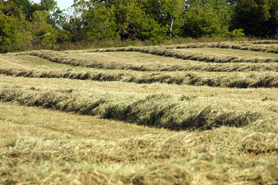 Cut alfalfa in central Pottawatomie County.