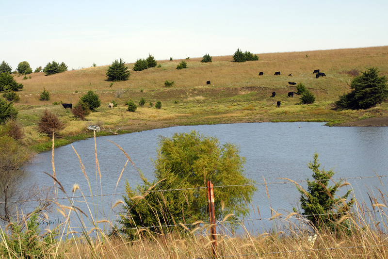 Pond and cattle in central Pottawatomie County