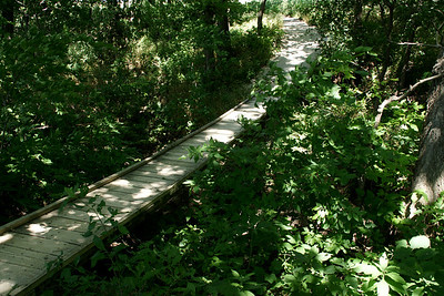 Konza Prairie nature trail. Footbridge over King's Creek.