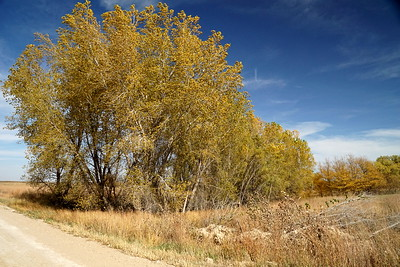 Fall color southeast Gove County