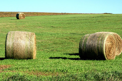Hay bales - southeast Graham County