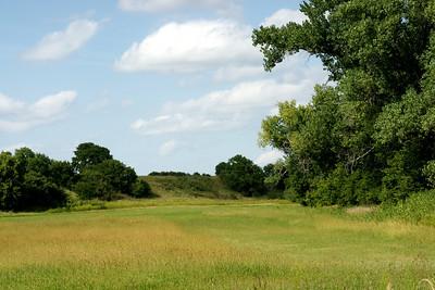 Field near Bow Creek