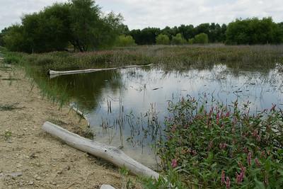 Overflow area at Webster Reservoir