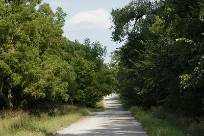Driving thru trees near Bow Creek