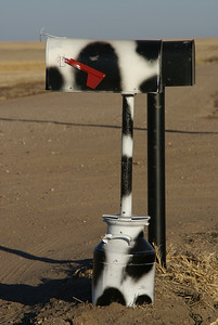 Black and White Holstein cattle mailbox - southwest Sheridan County