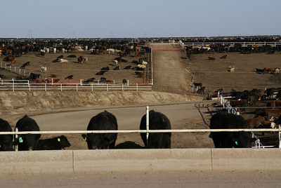 Hoxie Feedlot