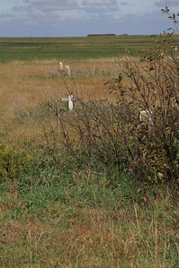 Abandoned Presbyterian Cemetery near Beaver