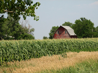 Corn field and red barn along 150th - western Marion County