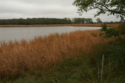 Pond at Quivira National Wildlife Refuge