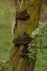 Growth on tree trunk - nature trail - Quivira National Wildlife Refuge