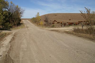 Cattle in pasture near Wildcat Creek