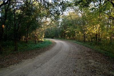 Forested area near Halderman Creek - northeast Greenwood County