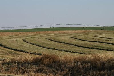 Alfalfa field in southern Finney County