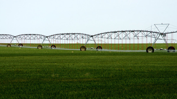 Wheat being irrigated in western Grant County