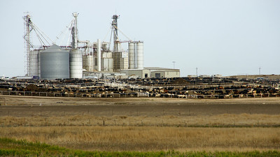 Feedlot in southwest Grant County