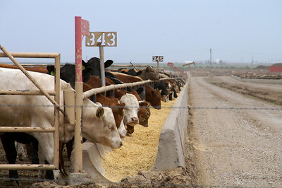 Cattle Empire Feedlot - western Haskell County