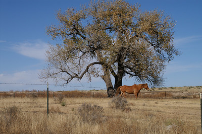 Horse and tree along North River Road west of Lakin