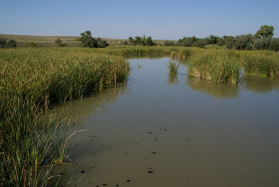 Marsh area along East Kiowa Creek - Kiowa/Comanche county line