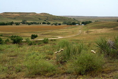 View across Medicine Lodge River valley towards Iron Mountain - southern Kiowa County