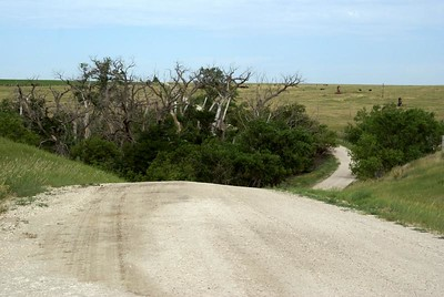 Road across Cheyenne Creek - northern Lane County