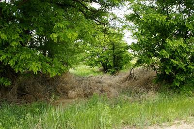 Tumbleweeds against fence - eastern Morton County