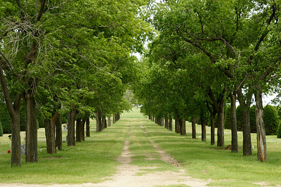 Tree lined lane through Richfield Cemetery