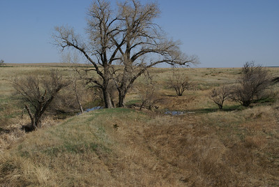 Spring Creek - southwest Ness County