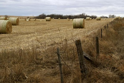 Bales in field southeast of Brownell