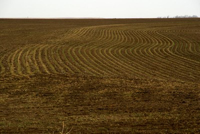 Drilled wheat furrows