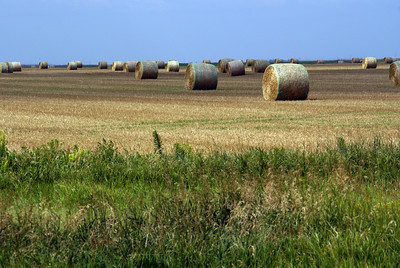 Baled wheat straw east of Liebenthal