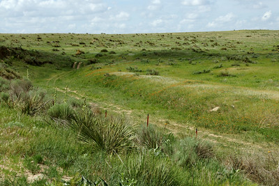High plains vegetation in northwest Seward County