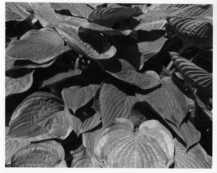 Medium: Kentmere VC  Select (grade 2 filter)<br /> Print exposure time: 10 sec<br /> Lens: Wollensak @ f32<br /> Enlarged 2:1