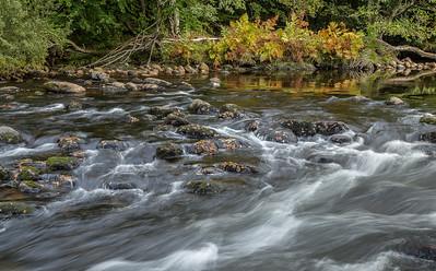 Royal ferns turning orange on the River Dart