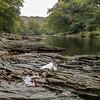 Riverside rocks on the Dart at Newbridge