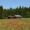 Wildflowers and cabin.