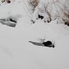Beaver Finds a Break in the Ice