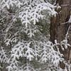 Snow on Balsam