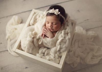 darya newborn mini