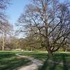 Der Keakibaum ist selten in Österreich