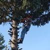 Als Handicap erwies sich  die Normalsäge mit ihren mehr als 6 kg, Richtige Arboristensägen sind da um die 40% leichter und für Einhandbedienung ausgelegt. Die kann man sich an den Gürtel hängen ohne dass es einem die Hose auszieht.