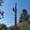 Nach dem Fall des Wipfels musste der Stamm um weitere 5 Meter gekappt werden, damit er nicht auf der Terrasse landet