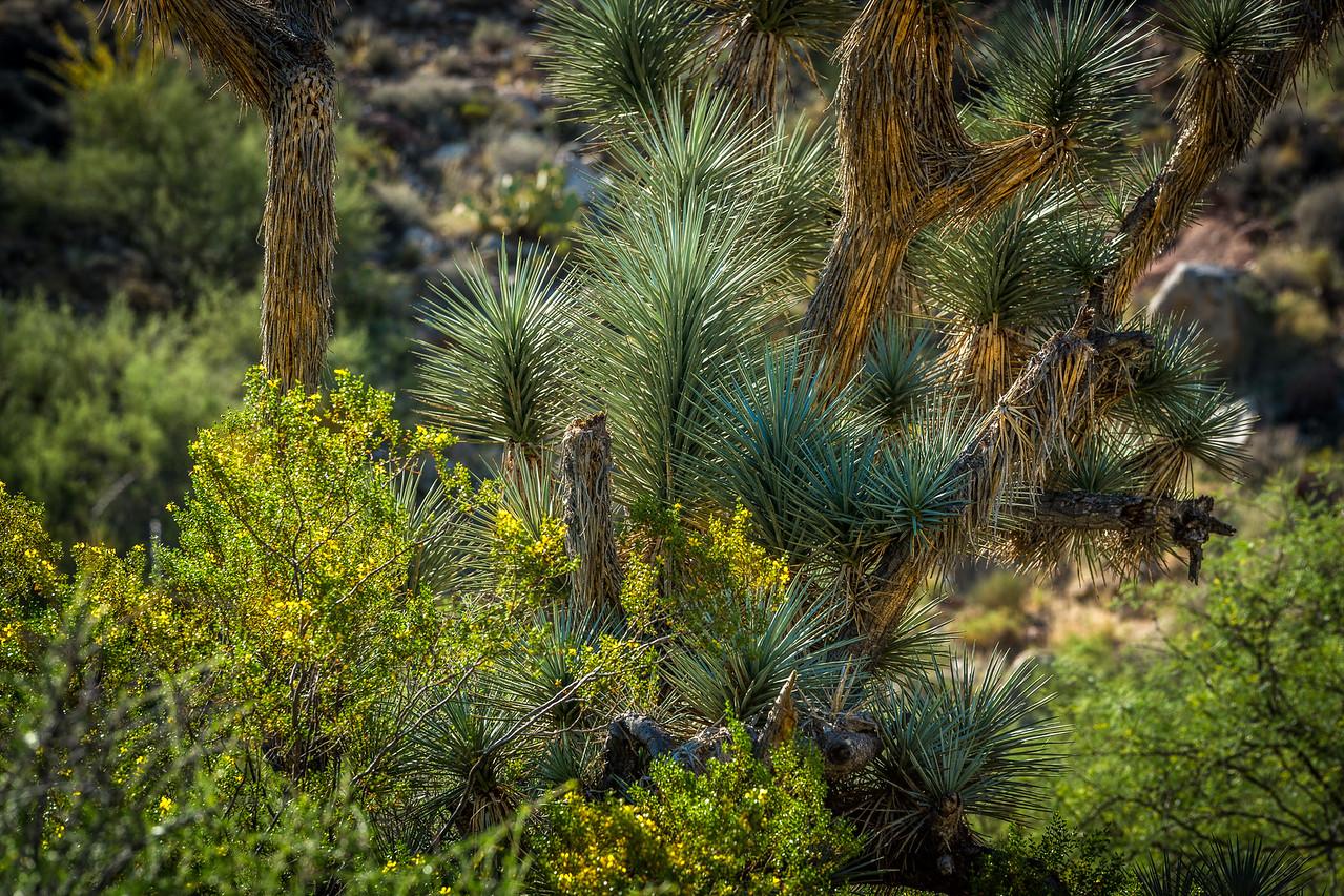 More Desert Beauty